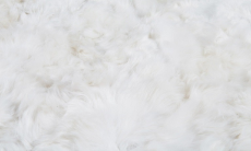 Alpaca Fur Standard Sample Sets in Pearl White